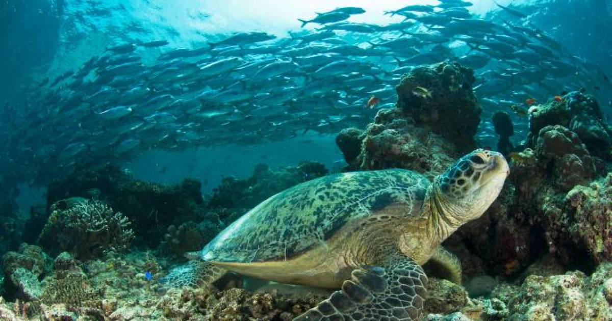 Sea Turtles Are Turning Female Here's Why