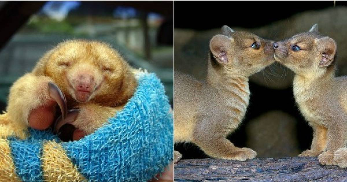 These Are The Cutest Little Animals You Will Ever See.