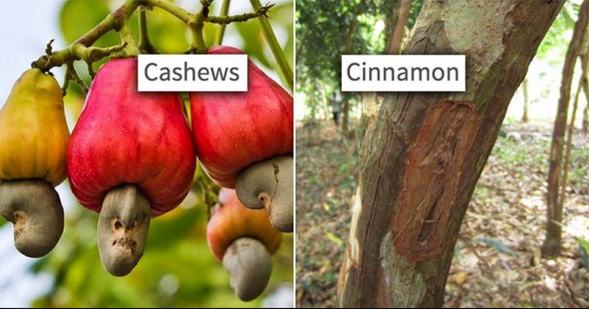 12 Photos Of Food That Prove We Have No Idea How It Really Grows
