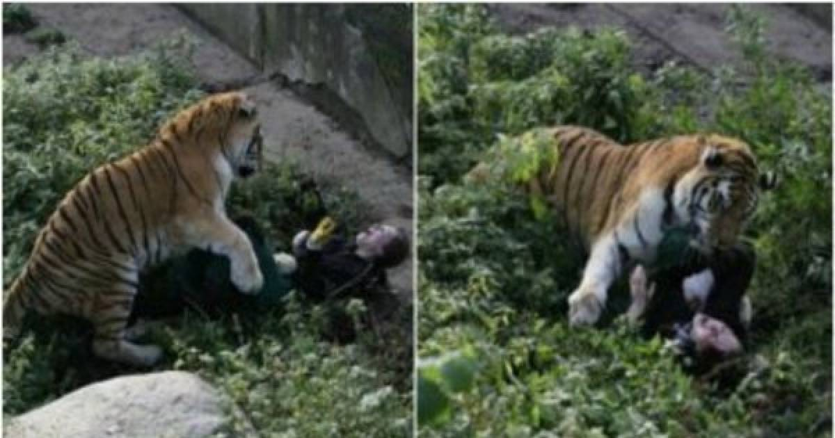 While Terrified Tourists Looked On, This Siberian Tiger Mauled A 16-Year-Old Zookeeper.