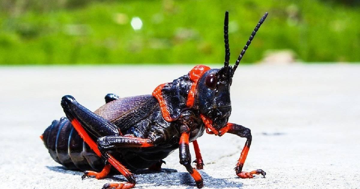 50 Shades Of Wrong: Disturbing Insect Mating Rituals