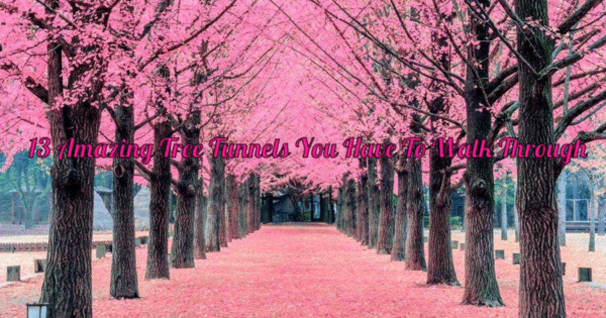 You Absolutely Must Take A Stroll Through These 13 Romantic Tree Tunnels