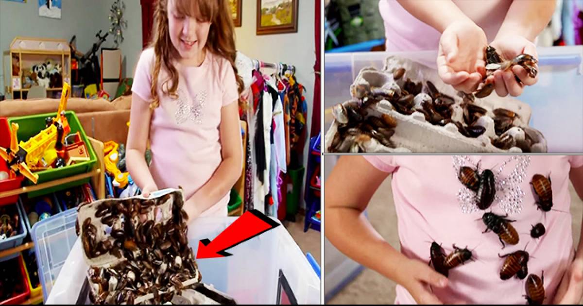Meet 8-Year-Old, Shelby Counterman, Who Has Thousands Of Cockroaches As Her Treasured Pets