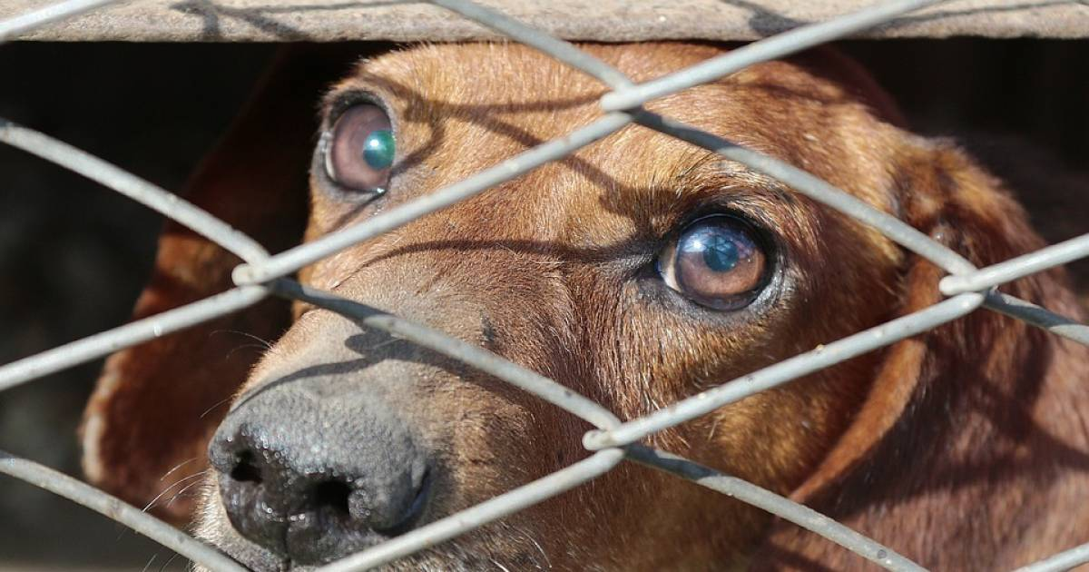 Animal Abusers Are Now Being Registered Like Sex Offenders