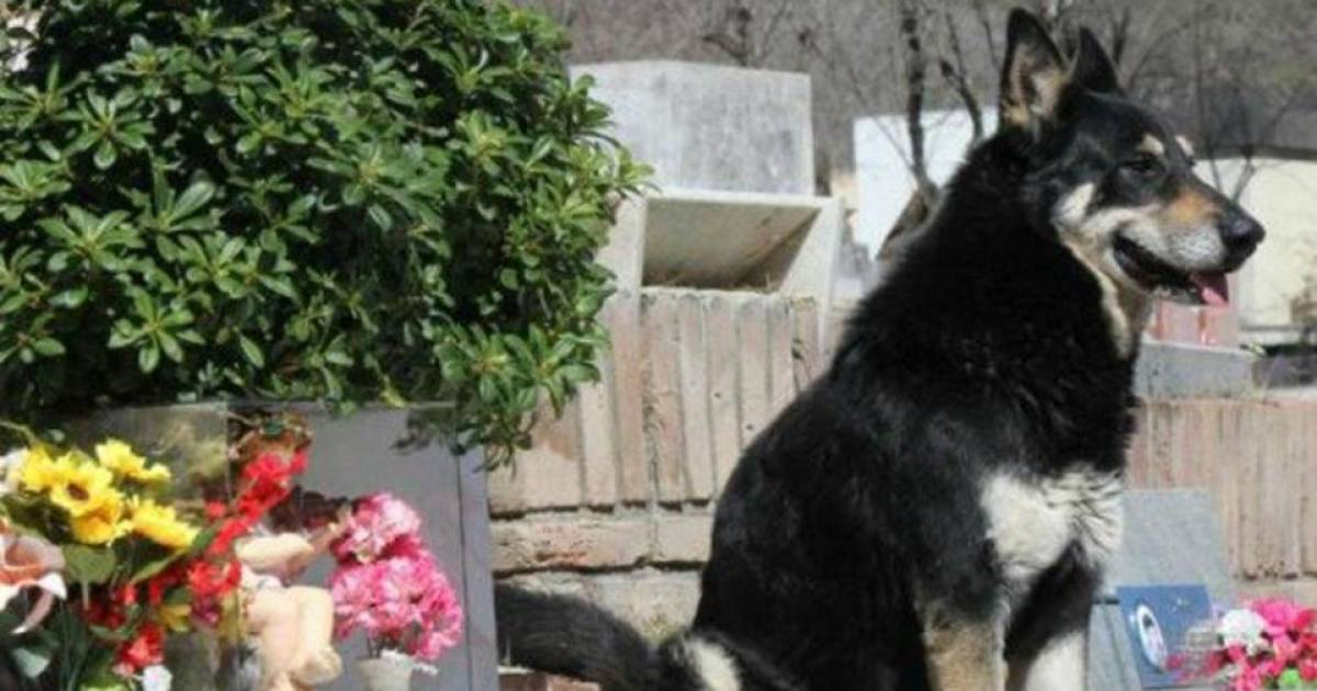 Faithful Dog Dies Next To His Owner's Grave After Refusing To Leave The Grave For 10 Years