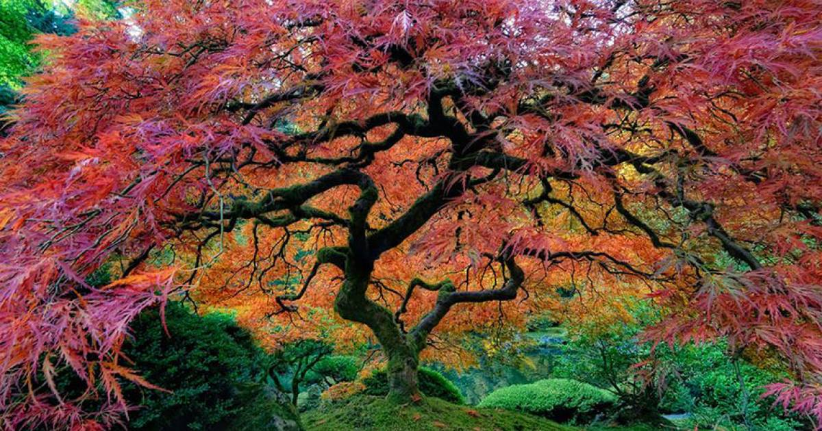 10 Of The Most Amazing Trees From Around The Globe