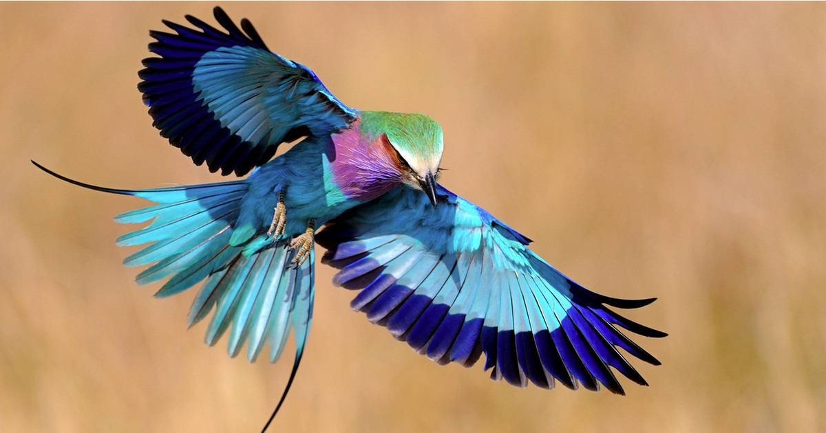 These Gorgeous Wild Birds Prove That Nature Is Amazing