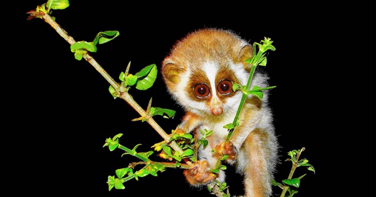 10 Critically Endangered Species That Future Generations May Never Get To See