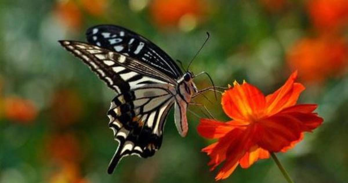 Check Out These Breathtaking Butterflies From Around The World