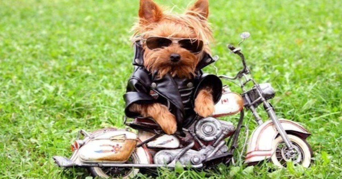 Here Are Some Pictures That Prove That Your Pets Are Cooler Than You