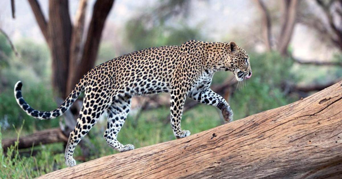 Breathtaking Images Of The Most Amazing Wild Cats From Around The World
