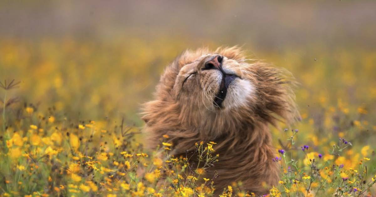 Visually Stunning National Geographic Animal Photos That Will Leave You In Awe