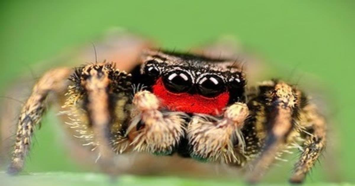 Spiders Are The Most Misunderstood Creatures On Earth