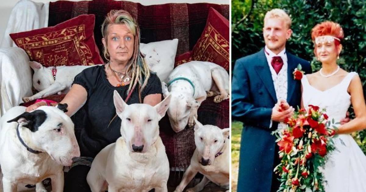 Husband Says 'It's Me Or The Dog' Wife Chooses Her Beloved Bull Terriers, Ends 25-Year Marriage
