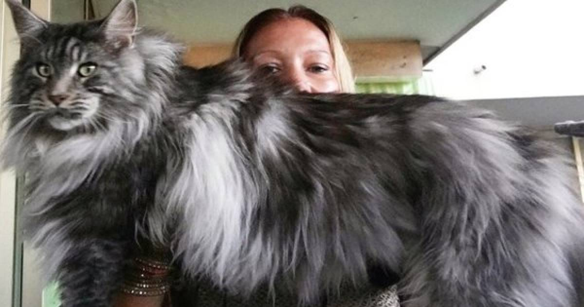 These Super-Sized Kitties Will Definitely Steal Your Heart