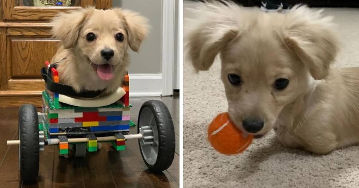 Young Boy Helps A Disabled Puppy Move Around By Building Him A Wheelchair Of LEGO Bricks