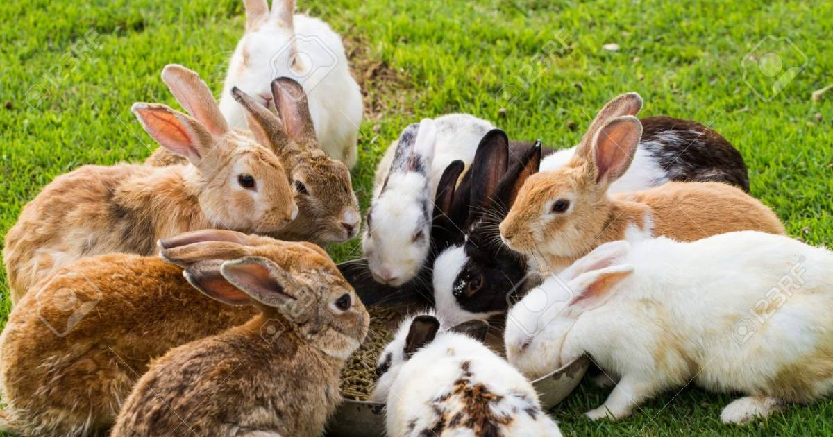 According To Vets, Rabbits Should Be Kept In Groups Or With A Partner To Combat Loneliness