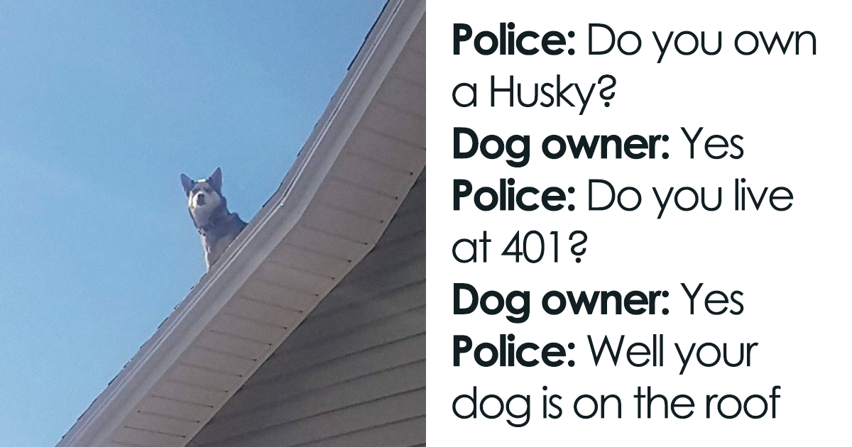 Police Calls Man To Inform Him His Husky Is Sitting On Top Of The Roof, Sends Hilarious Evidence As Proof