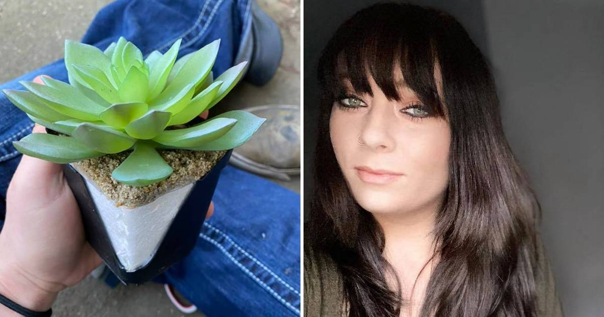 Woman Watering Beautiful Succulent For Past Two Years Discovers It Is Actually Plastic