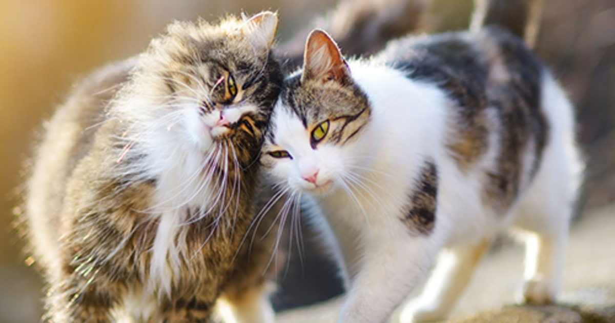 10 Crazy And Cool Facts About Cats That You Probably Don't Know