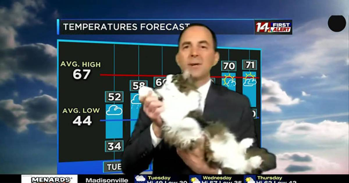 Weatherman's Live At-Home Forecast Goes Viral After His Adorable Cat Bombs His Show And Becomes His Beloved Co-Host