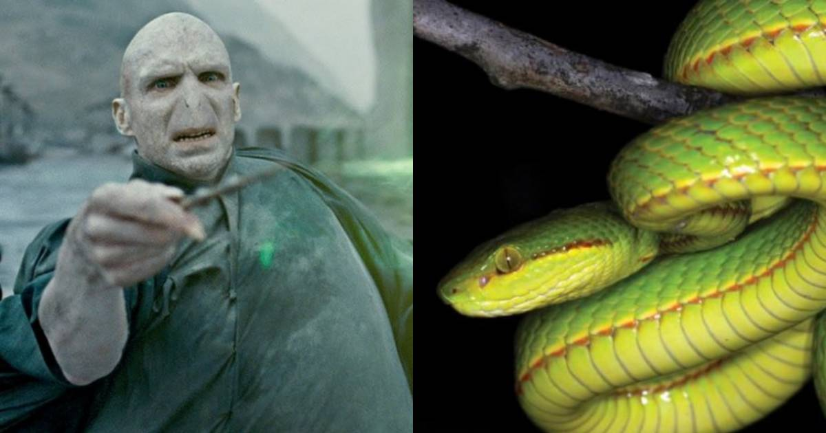 A New Snake Discovered By Scientists Has Been Named Salazar Slytherin From Harry Potter