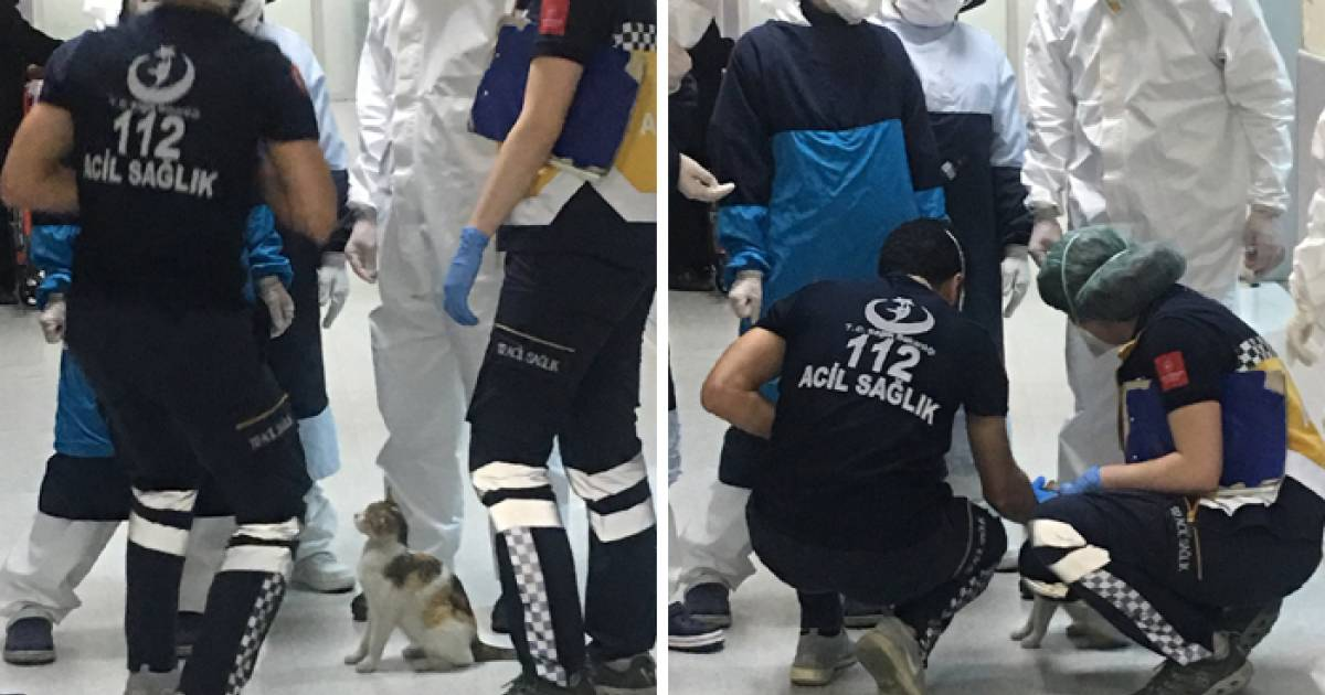 Stray Cat Brings Her Kitten To The Hospital In Turkey, Paramedics Rush To Help Them