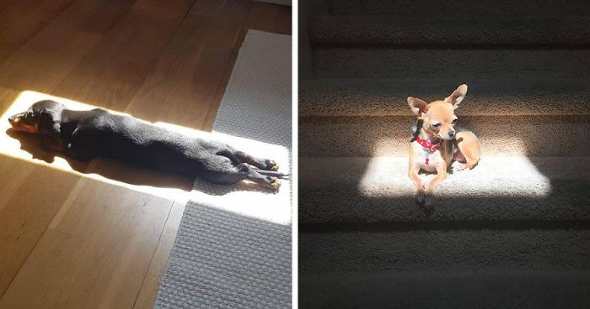 21 Pictures Of Pet Animals Enjoying A Good Sunbathe Is All You Need To See Today