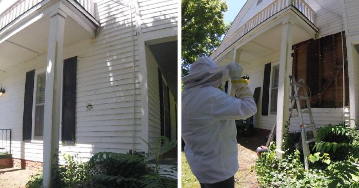 Bee Relocator's Pictures Go Viral As He Posts What He Found After Removing The Outside Wall From A Client's Home