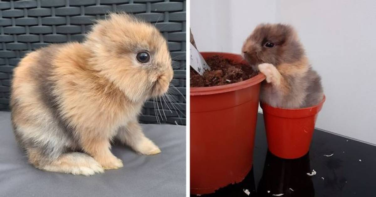 This Cute Rabbit Was Born Without Ears And His Adorable Pictures Are Enough To Melt Your Heart Today