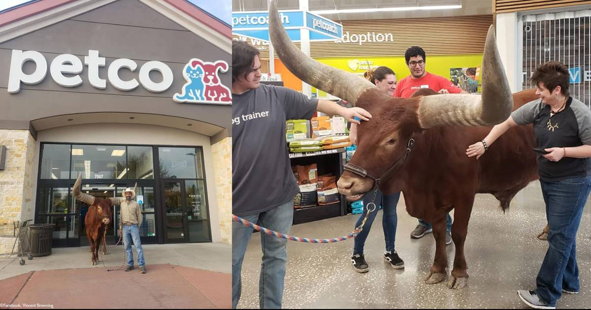 A Man Tested Petco's 'All Leashed Animals Welcome' With His 1,600 Pound Bull