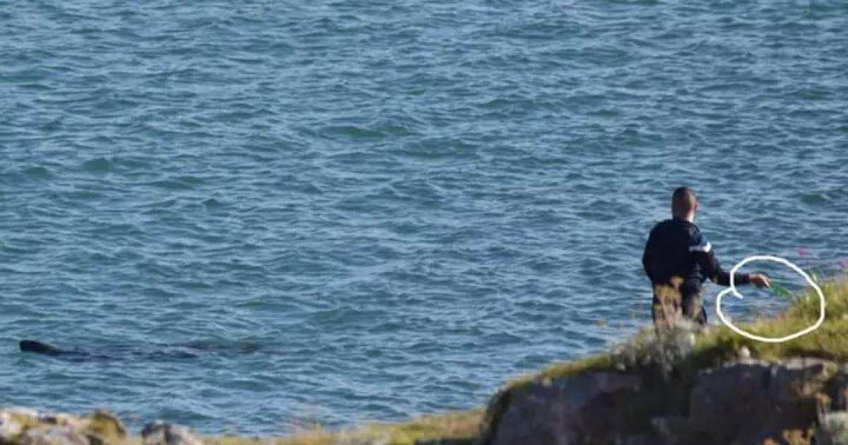 Shocking Photos Shows Fisherman Throwing Glass Bottle At Seal