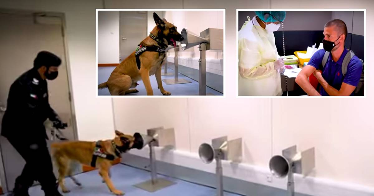 Dubai Airports Checking Passengers By Taking Help From Coronavirus Sniffing Dogs That Are Capable Of Smelling 92% Of Cases