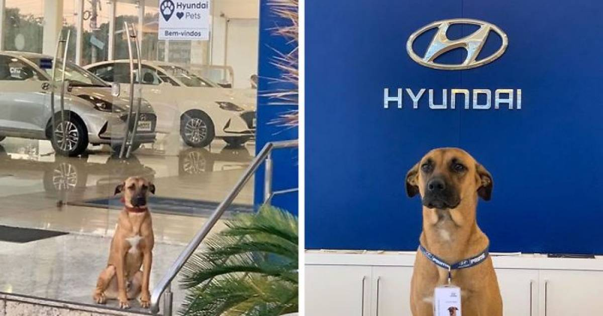 Stray Dog Keeps On Visiting Hyundai Dealership Showroom, Staff Hires Him And Even Gets Him His Own ID