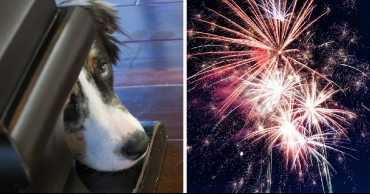 Italian Town Switch To Silent Fireworks To Minimize Animal Distress, Becomes The First City In The World To Do So