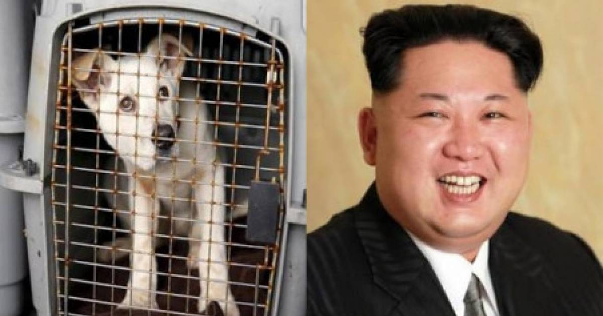 Kim-Jong-Un Orders Pet Dogs To Be Confiscated In North Korean Capital Pyongyang