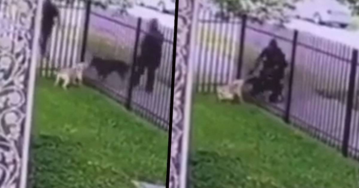 Cop Who Shot And Killed Dog In Its Own Garden Is Being Defended By The Detroit Police Force