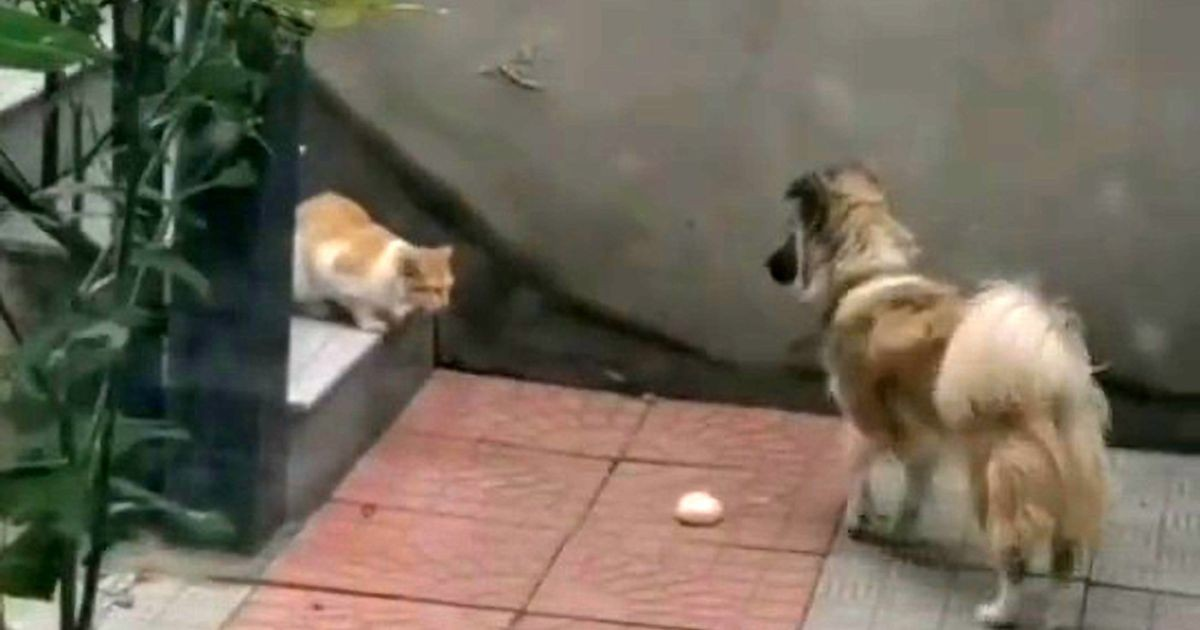 King Dog Gives Its Food To A Starving Stray Cat After Noticing It In The Garden