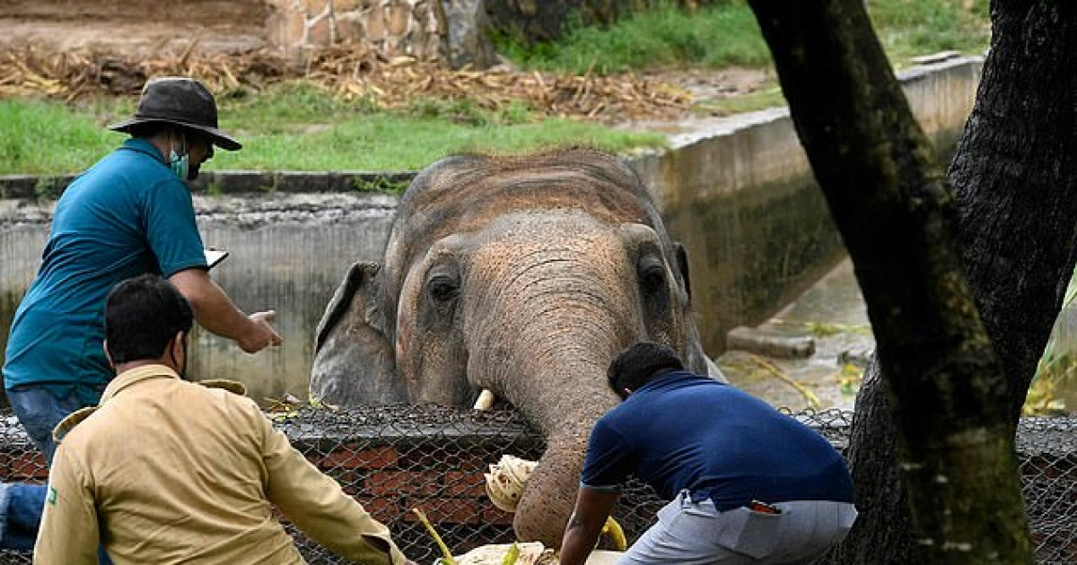 'World's Loneliest Elephant' Who Has Been Kept In A Tiny Enclosure For 35 Years Is Finally Allowed To Leave After Campaign By Animal Right Activists
