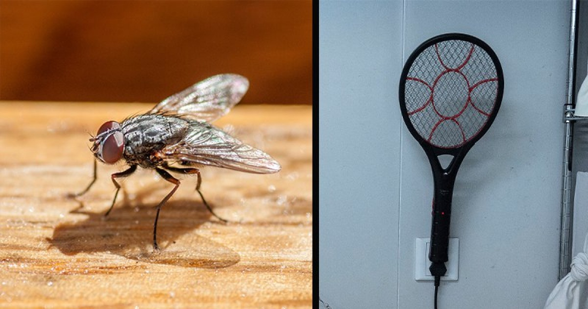 This Man Blows His House Up While Trying To Kill A Fly With Electrified Bug Swatter