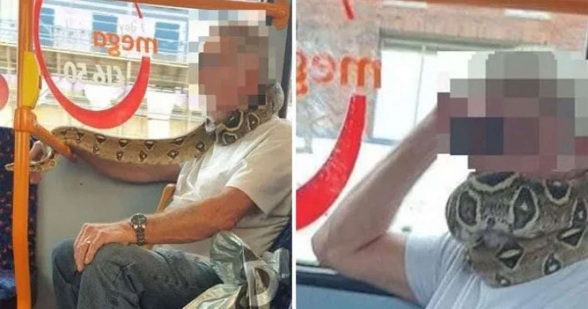 This Man Uses Live Snake As Face Mask While Travelling On Bus