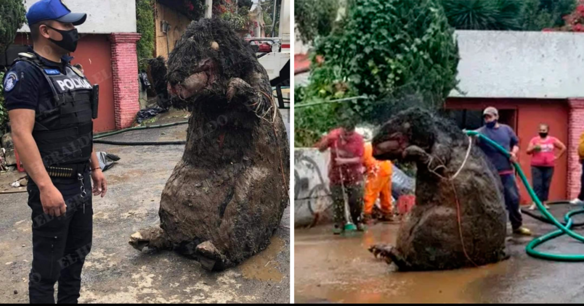 Shocked Mexican Workers Find 'Giant Rat' Prop While Cleaning Drains Following Heavy Floods
