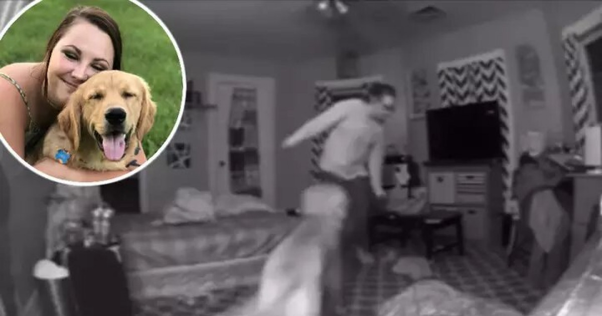 Dog Helps Owner Reach To Bed After She Comes Home From Night Out