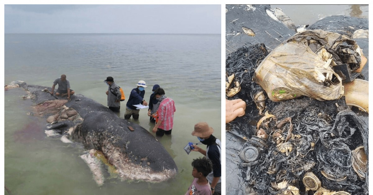 A Dead Whale Washed Ashore In Indonesia With 13 pounds of plastic Waste Filled In Its Belly