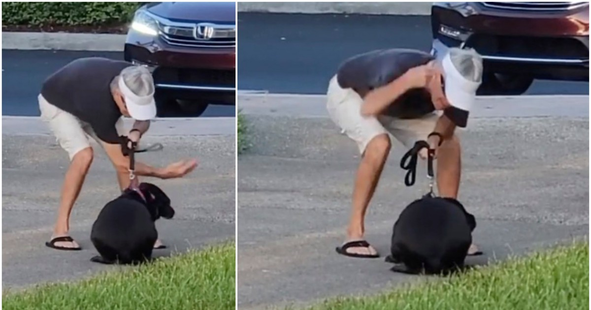 Lady Passing By Recorded This Florida Man Slapping And Punching His Cowering Pooch