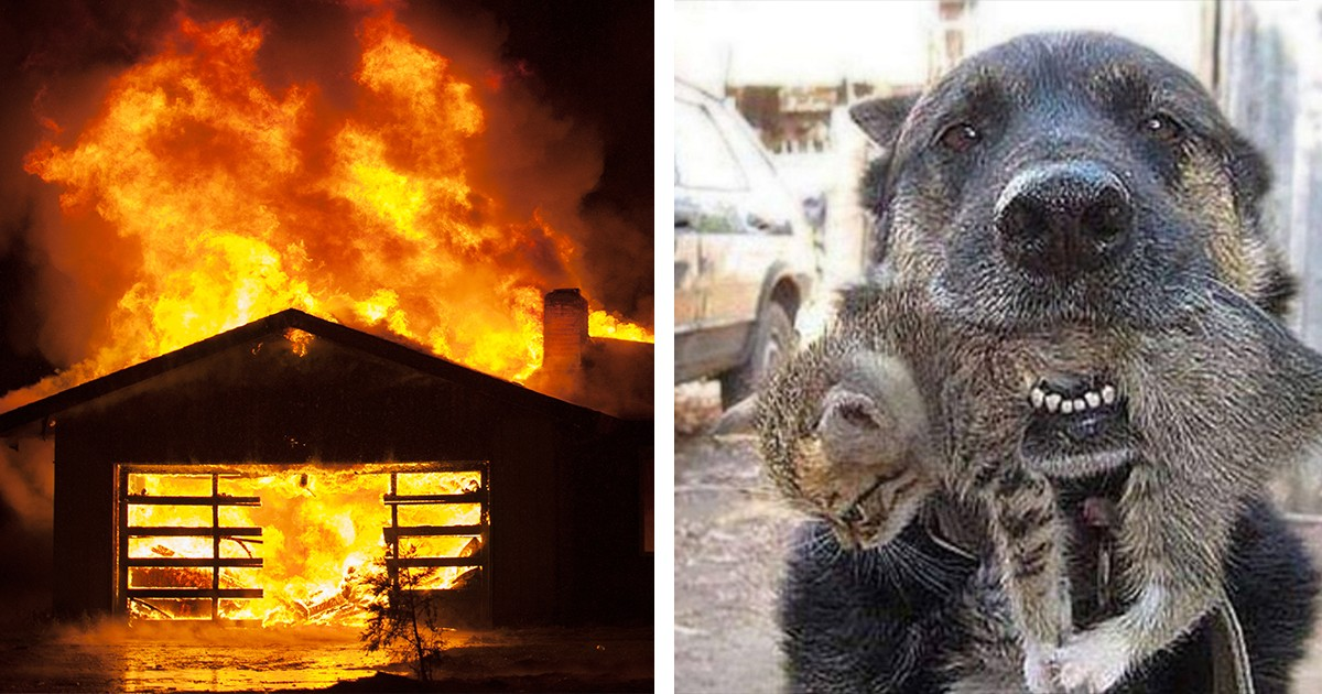 Brave Dog Darts Into Burning House To Save Kitten From The Flame