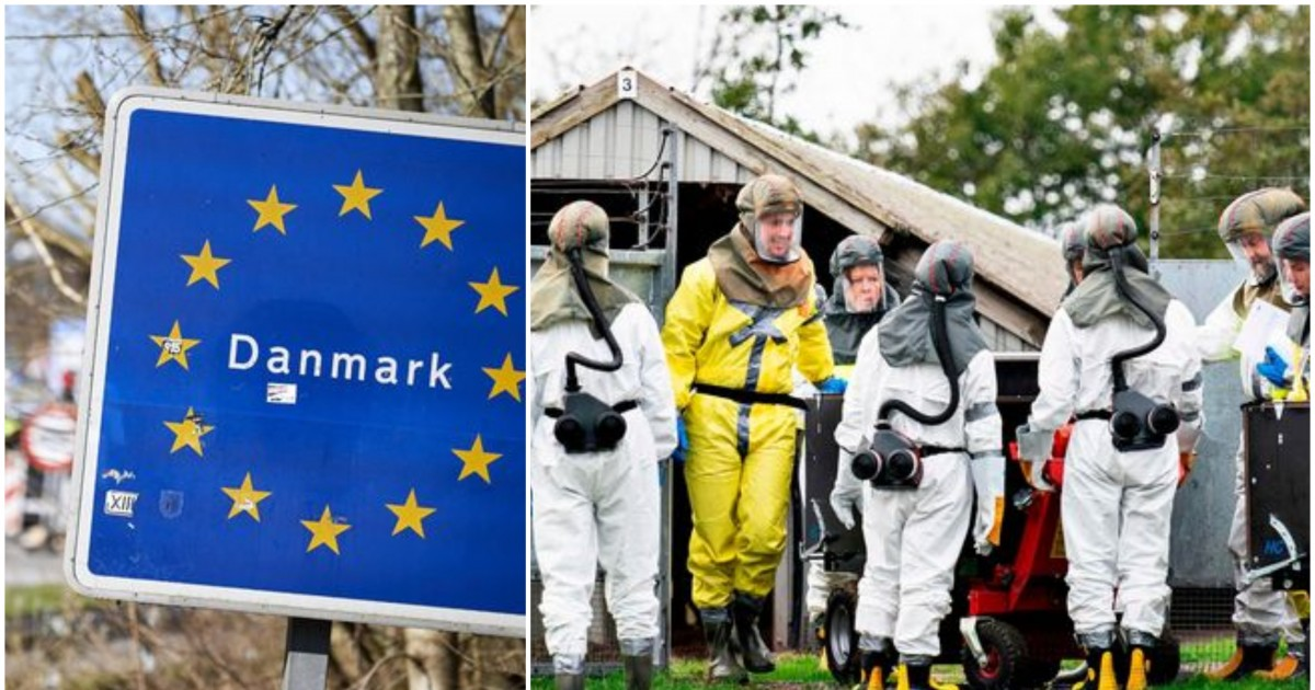 Denmark To Cull All Minks To Prevent Human Contagion After Coronavirus Outbreaks In A Mink Farm