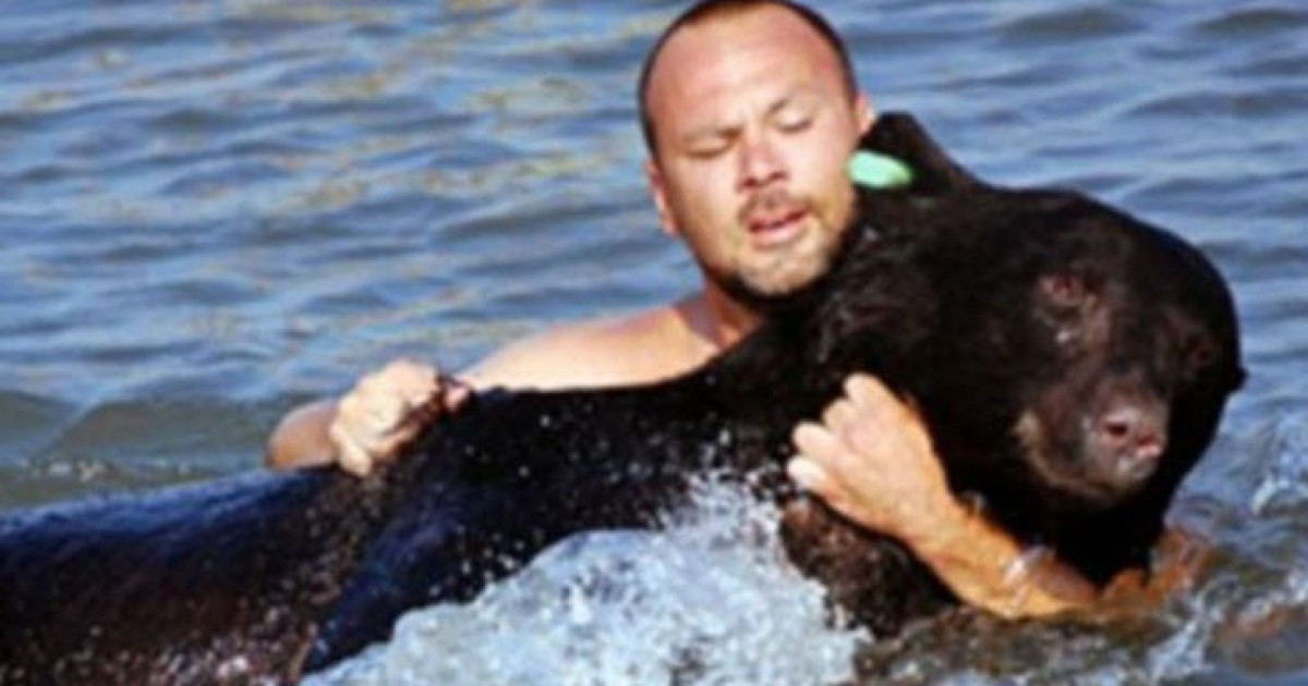 Brave Man Risks Life After Diving In The Gulf Of Mexico To Save A Drowning Bear