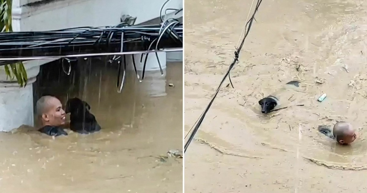 Brave Man Swims Through 6ft Deep Waters To Rescue Trapped Hound From Flooded House In Typhoon-Hit Philippines