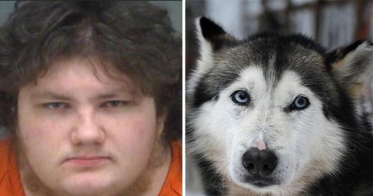 Sick Pervert Man In Dog Costume Filmed Himself Having Sex With His Siberian Husky